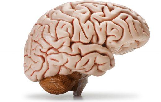 beyin-sagligi-icin-ne-yemeli