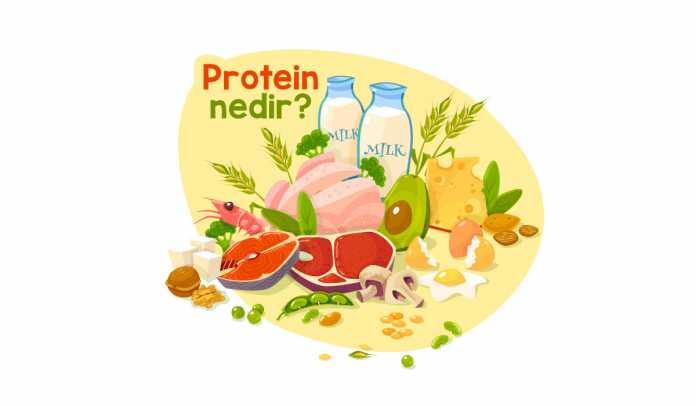 protein-nedir-vucut-icin-gerekli-midir