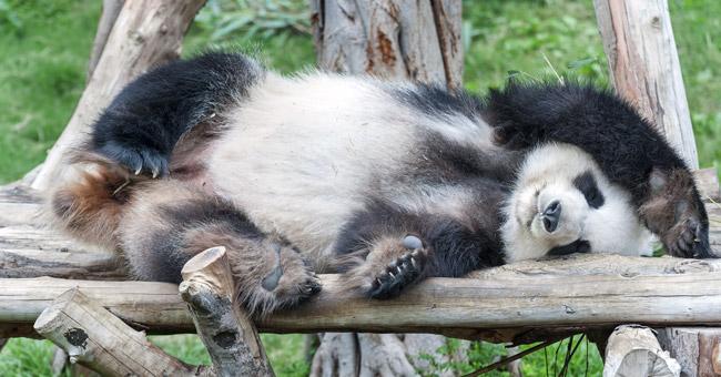 Yağ yakmak ve kas yapmak için uyku büyük önem taşır.