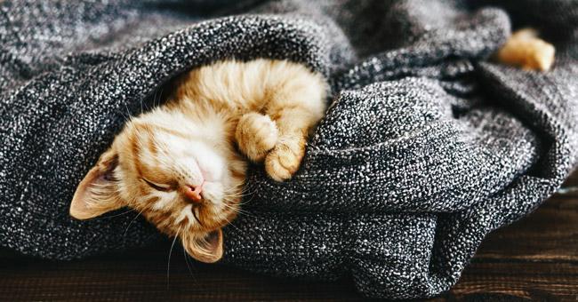 Az uyumak sağlıklı değildir. Uyku problemi bağışıklık sisteminin güçsüzleşmesine sebep olabilir.